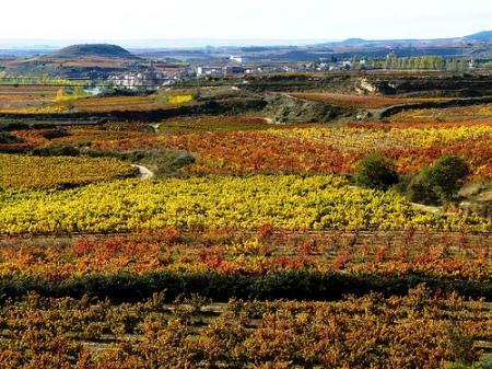 Paisaje Rioja