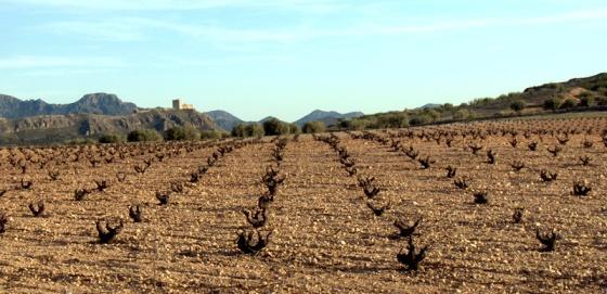El árido hábitat de la monastrell, con el castillo de Jumilla al fondo / DOJ