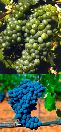 Mosaico uvas León