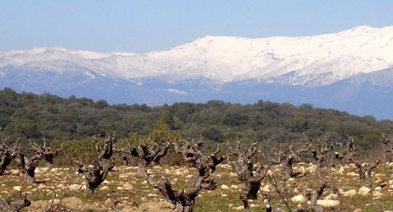 Viñas en Gredos_e