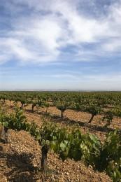 Uno de los viñedos de la propiedad. / BHV