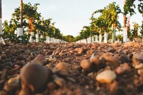 Los suelos del nuevo viñedo. / BR